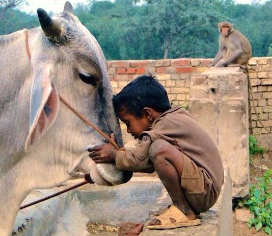 7 animal Rights